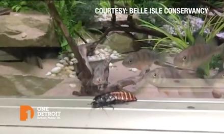 5/21/20: One Detroit – Brian Calley / YumVillage / John McElroy / Belle Isle Aquarium